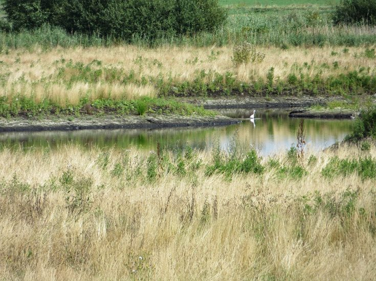 Great Fen Rymes Reedbed - Credit. Kate Carver