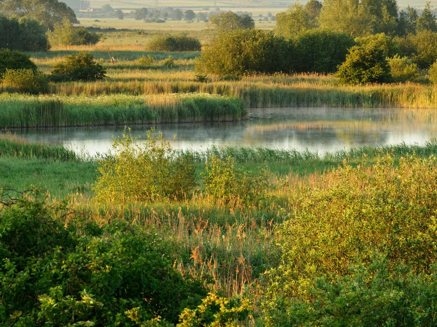 Wicken Fen Cambs - Terry Whittaker 2020VISION