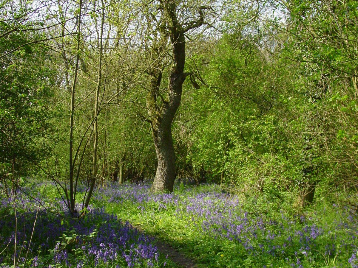 Wistow Wood - Credit. Pat Doody